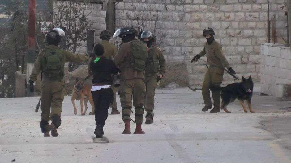 Une vidéo montre des soldats lâchant un chien sur un Palestinien