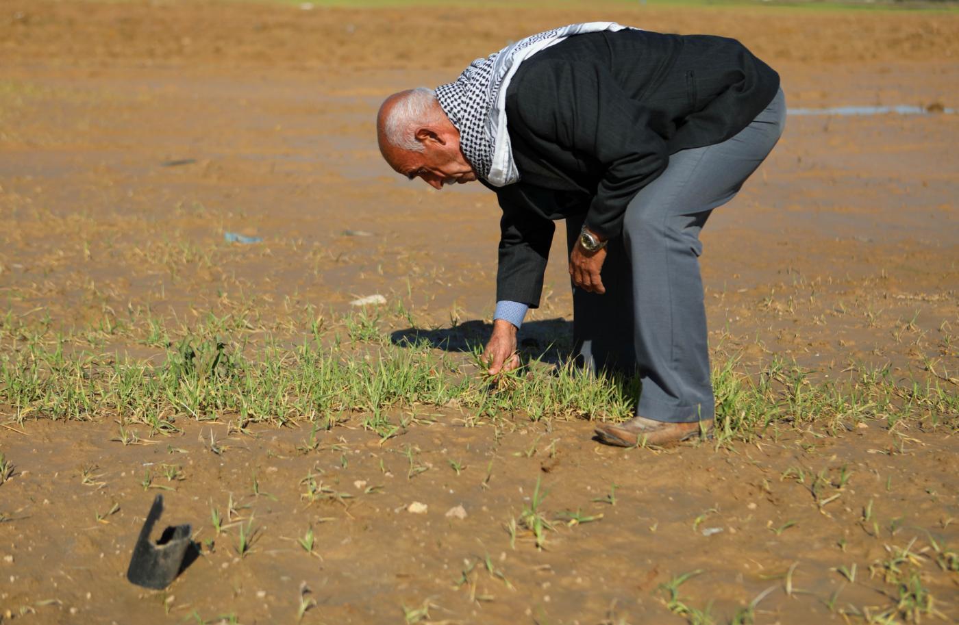 موت بطيء لمحاصيل غزة قبل الحصاد